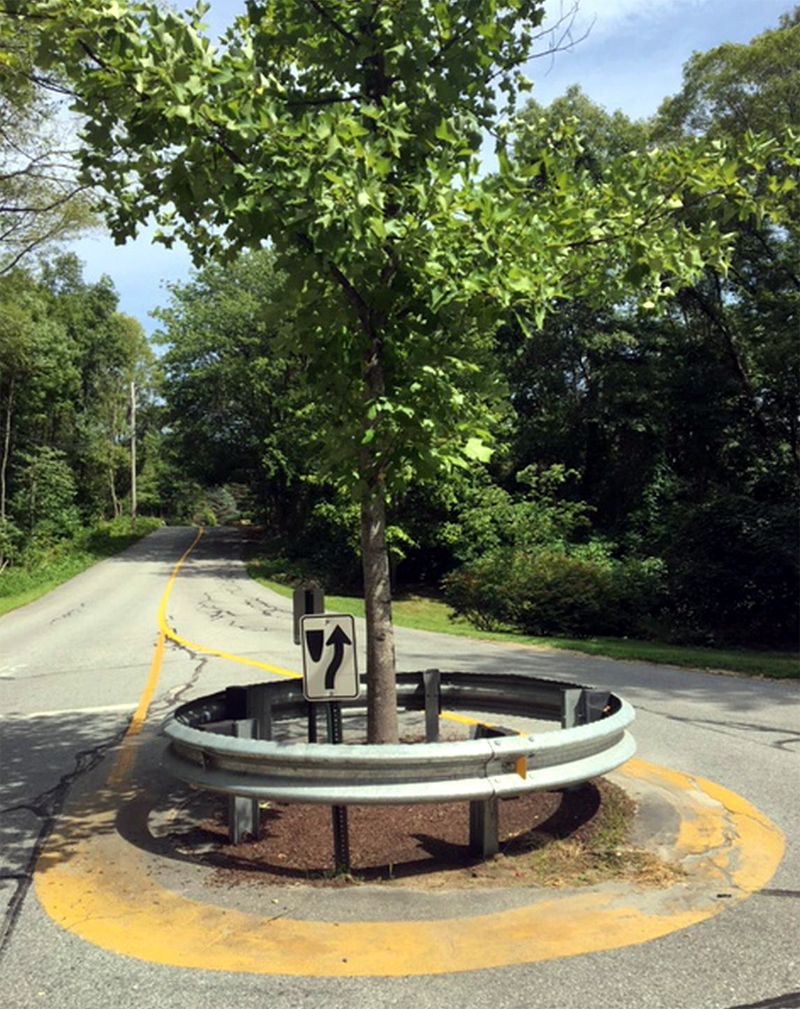 The Witch Tree Intersection today.