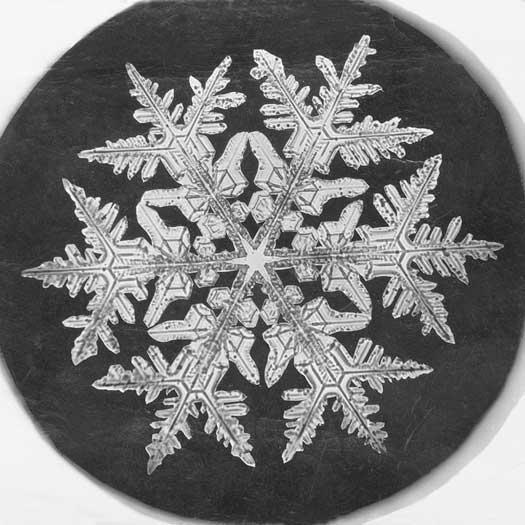 A Snowflake Bentley image circa 1890.
