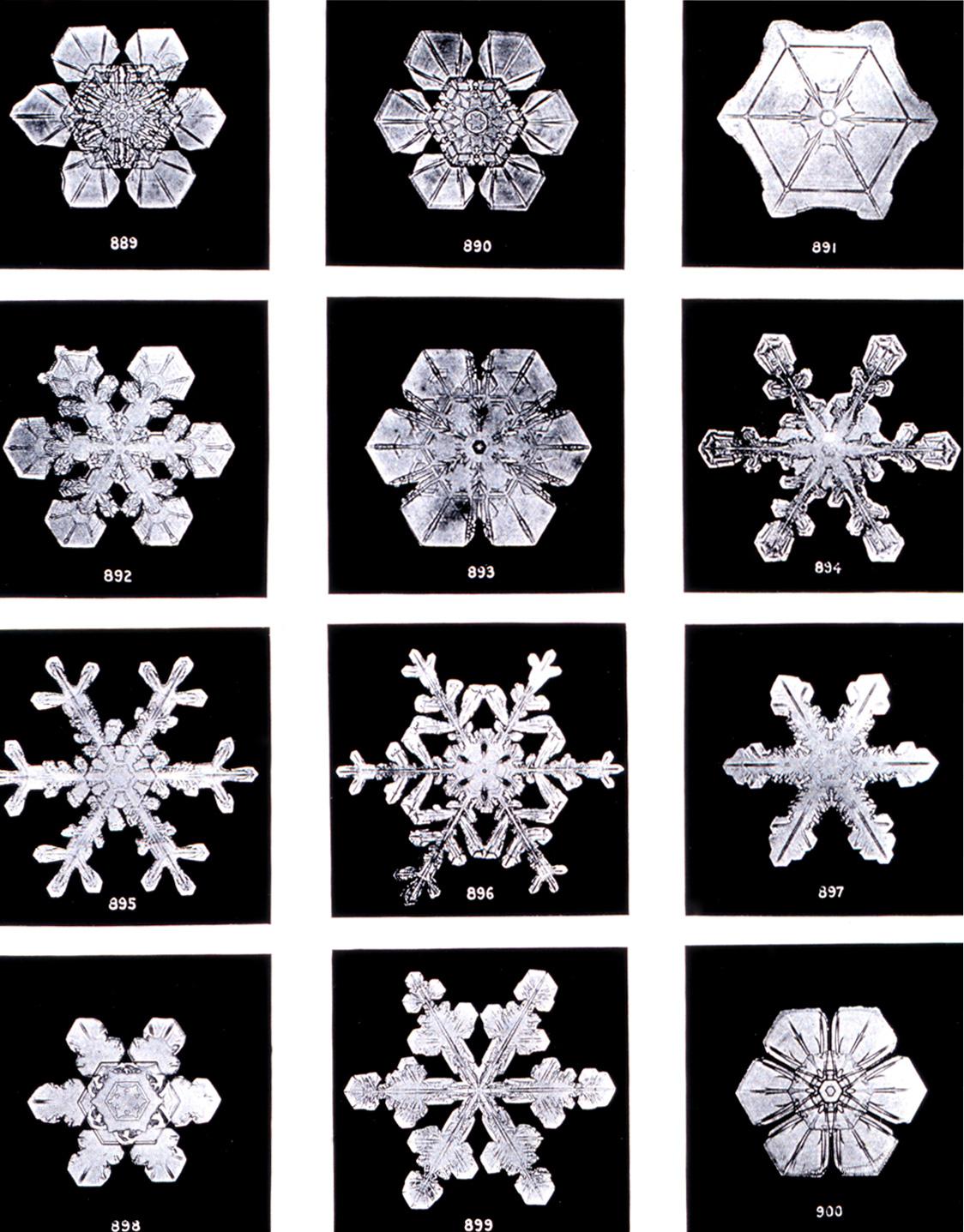 The Snowflakes of Wilson Bentley, Jericho, Vermont.